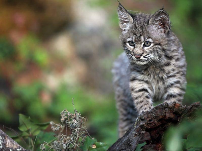 Nach ein paar Monaten gehen die Tierbabys auf Tour: Zunächst mit ihrer Mutter – Bild: Shutterstock / mlorenz