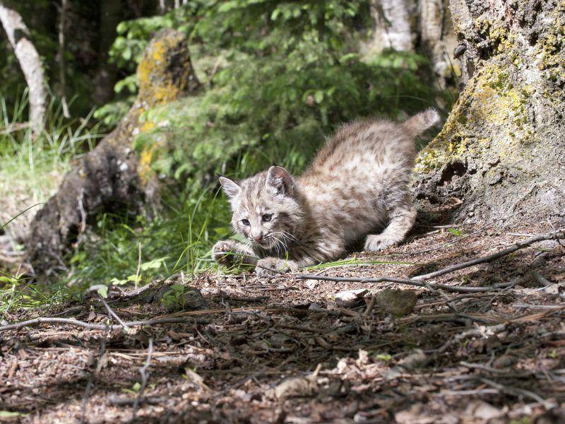 Am aktivsten sind die Tiere in den Stunden um Sonnenauf- und -untergang herum – Bild: Shutterstock / Scenic Shutterbug