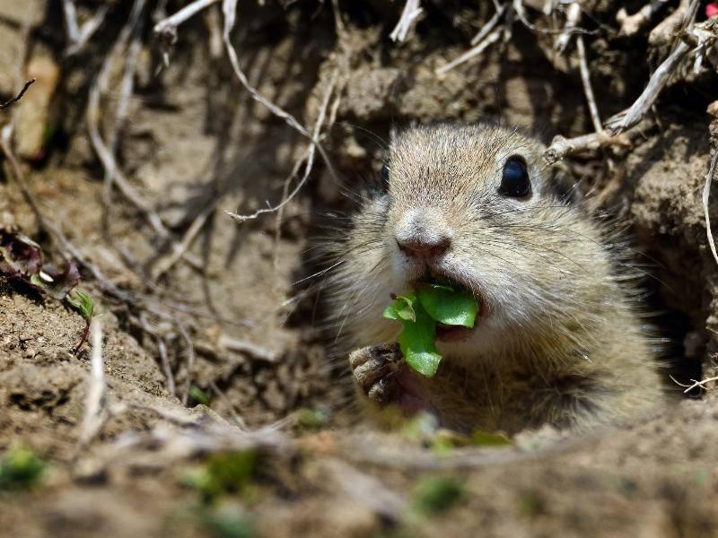 Sie ernähren sich hauptsächlich von Pflanzenteilen... – Bild: Shutterstock / aabeele