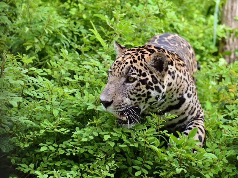 Vor allem im tropischen Regenwald sind diese Tiere zu finden – Bild: Shutterstock / Anan Kaewkhammul