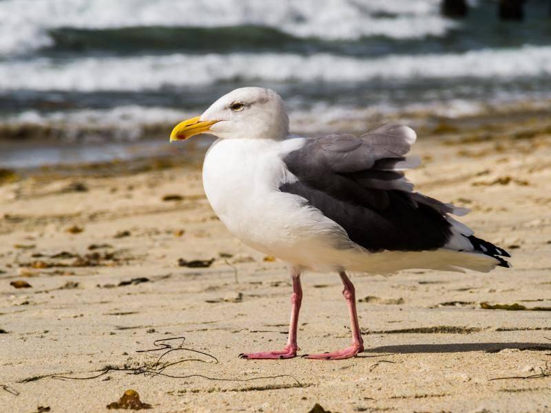 Sie leben vorwiegend an Küsten – Bild: Shutterstock / Eddie J. Rodriquez