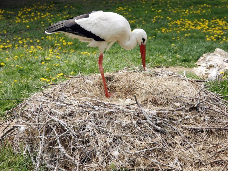 """""""Unsere Nester bauen wir nicht nur auf Bäumen, sondern auch manchmal am Boden!"""" – Bild: Shutterstock / acceptphoto"""