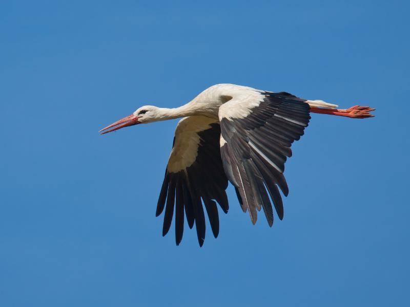 """""""Na dann kann das selbstständige Leben als Storch doch beginnen! Auf geht's!"""" – Bild: Shutterstock / TCreativeMedia"""