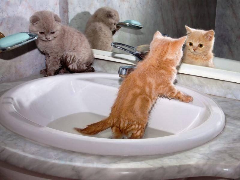 Wasserscheu? Bei diesen lustigen BKH's ist das Gegenteil der Fall – Bild: Shutterstock / vvvita