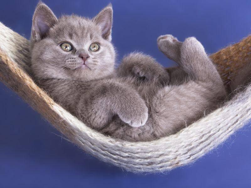 Und nach dem Spielen ist Relaxen angesagt – zum Beispiel in der Hängematte! – Bild: Shutterstock / Liliya Kulianionak