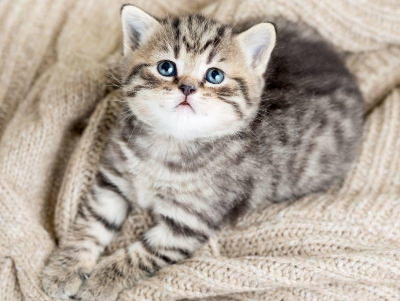 "Verspielte Minimiez: ""Sehe ich da oben etwa eine Federangel?"" – Bild: Shutterstock / Oksana Kuzmina"