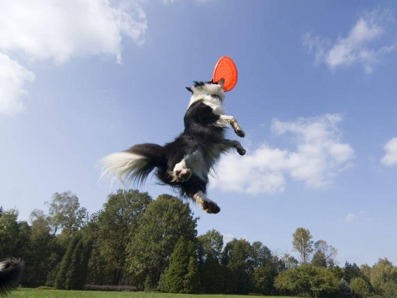 Sportlich, sportlich, dieser Frisbee-Fan! – Bild: Shutterstock / forbis