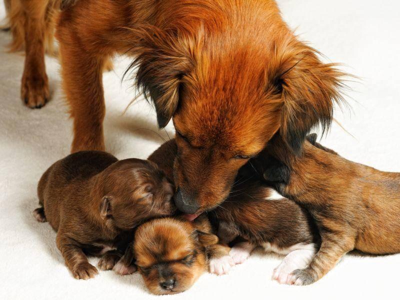 Pflegestunde bei ein paar Babyhunden: Sind alle da? – Bild: Shutterstock / Yuriy Chertok