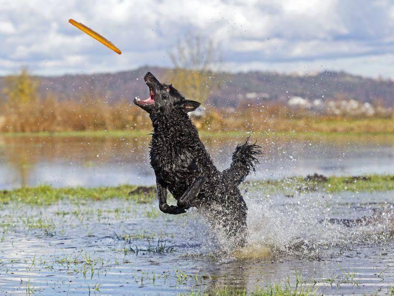 Frisbee und Wasser – eine tolle Kombination! – Bild: Shutterstock / LexiTheMonster