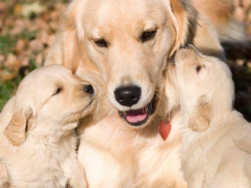 """""""Mama, soll ich dir mal was ins Ohr flüstern?"""" – Bild: Shutterstock / vahamrick"""