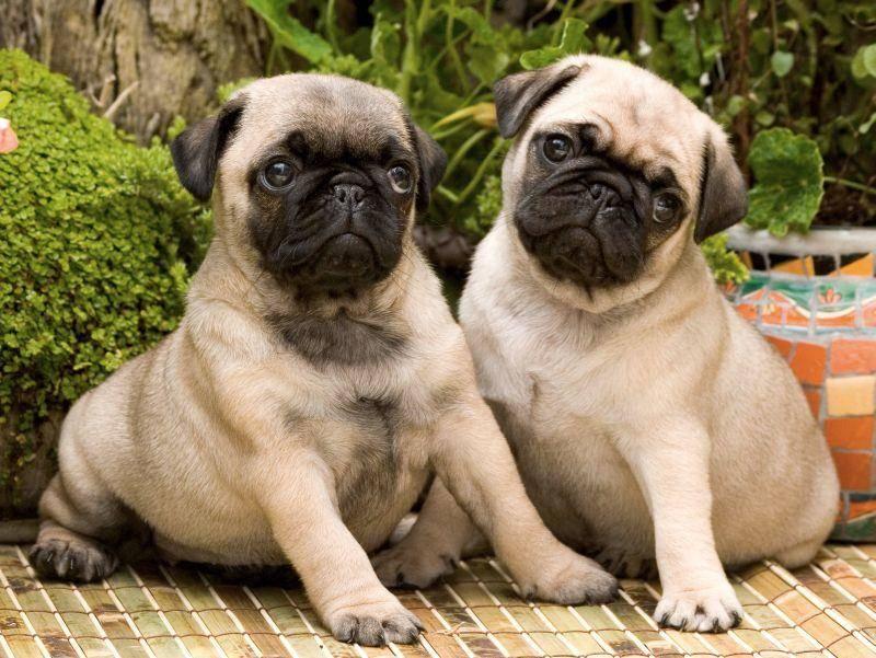 Sich für das Foto in Pose setzen: Das beherrschen diese süßen Doppelgänger perfekt! – Bild: Shutterstock / Dancestrokes
