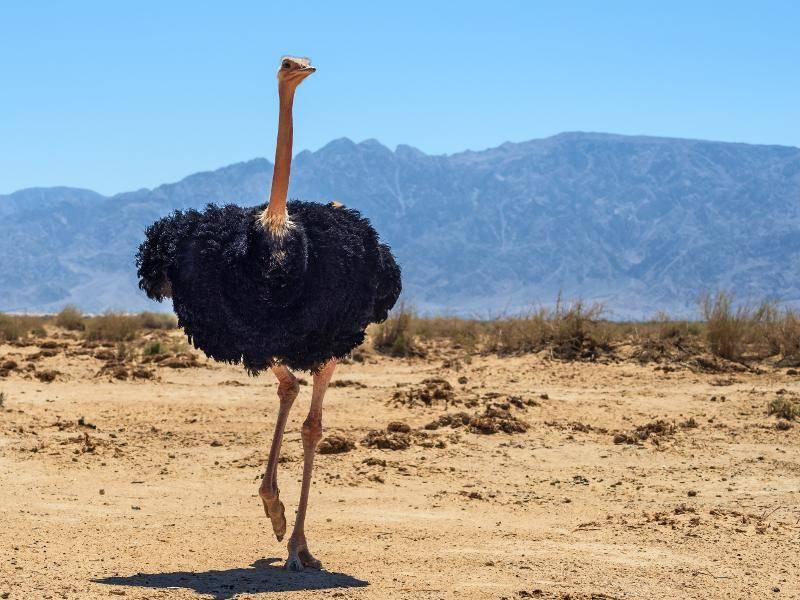 In der Paarungszeit bilden sie allerdings Territorien – Bild: Shutterstock / Sergei25