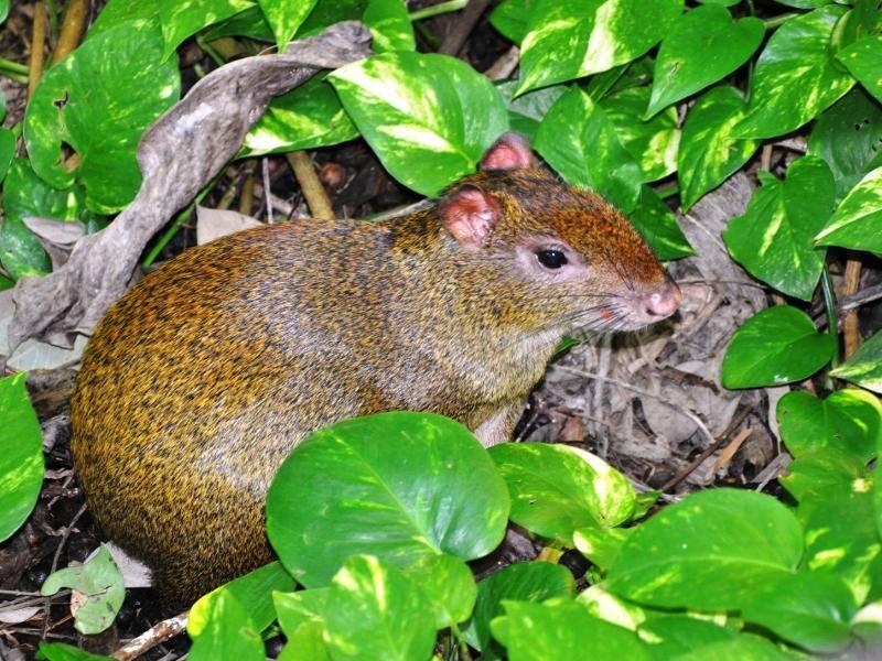 Sie leben in unterschiedlichen Gebieten, darunter Wälder und Savannen – Bild: Shutterstock / Vsevolod33