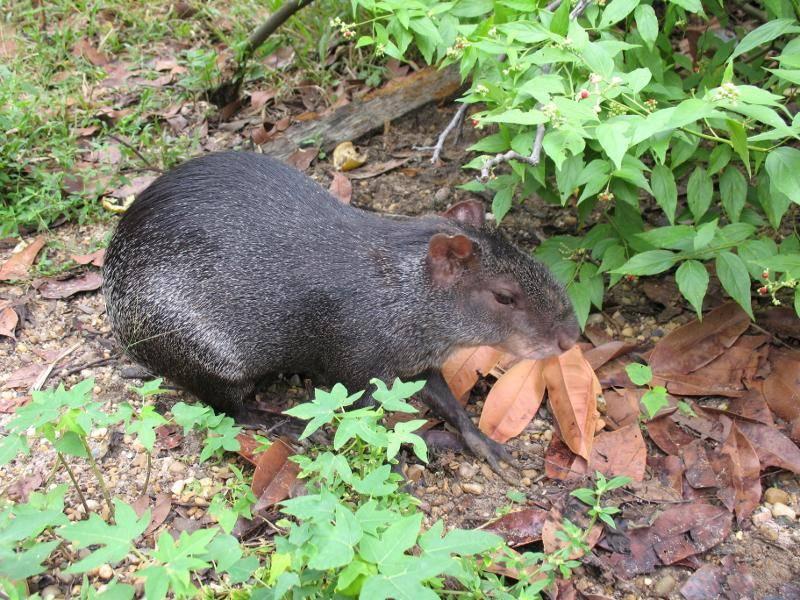 Fünf davon sind allerdings auf der Roten Liste gefährdeter Arten zu finden – Bild: Shutterstock / guentermanaus