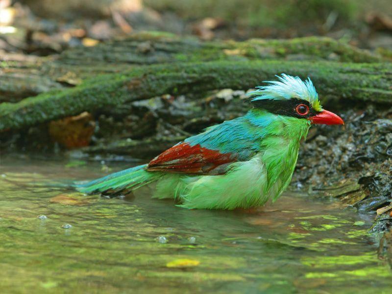 Schon fertig geplanscht, kleiner Vogel? – Bild: Shutterstock / gopause
