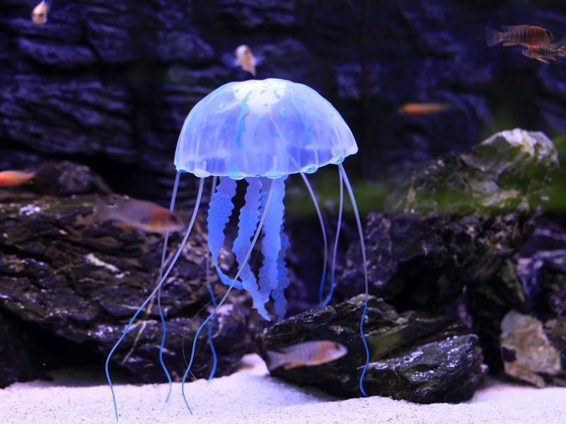 So leuchten manche Quallen in einem zarten Blauton... – Bild: Shutterstock / zhengzaishuru