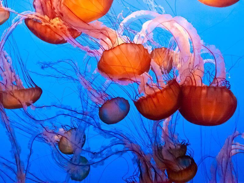 Wirklich beeindruckend, diese farbenfrohen Quallen! – Bild: Shutterstock / Mariusz S. Jurgielewicz