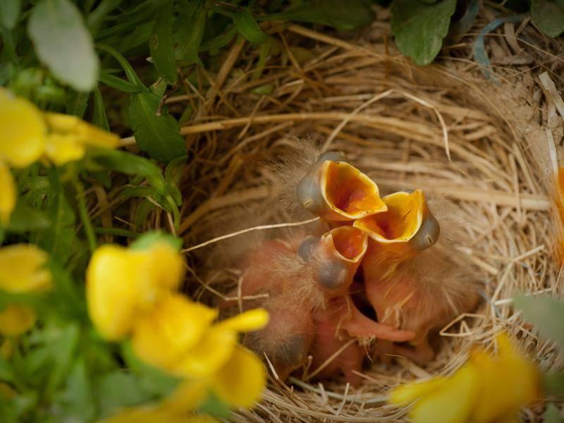 Wenn die Vögelchen schlüpfen, sieht man allerdings noch wenig davon – Bild: Shutterstock / jadimages