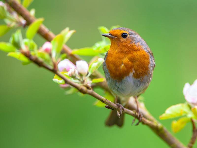 Dort leben sie zum Beispiel in Wäldern – am liebsten in der Nähe von Wasserquellen – Bild: Shutterstock / CreativeNature R.Zwerver