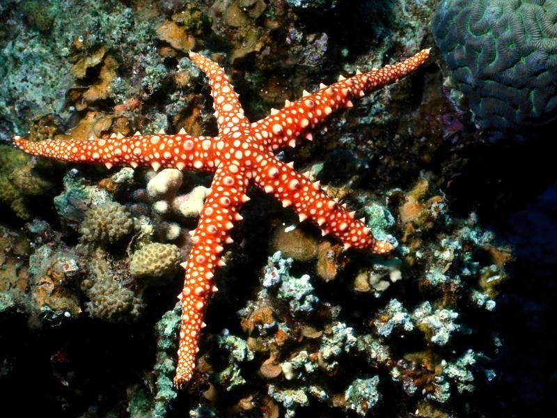 So sind viele dieser Lebewesen in orange-weißer Färbung zu finden – Bild: Shutterstock / Nir Darom