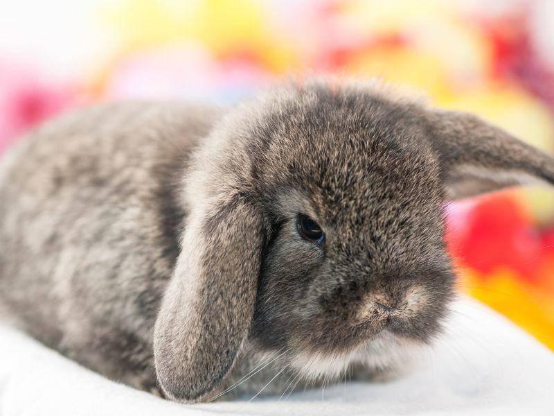 So süß sind Zwergwidder als Babys – Bild: Shutterstock / Kitty Bern