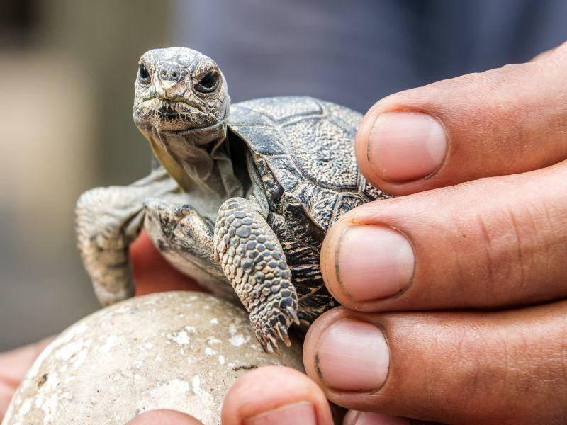 So klein ist sie als Baby ... – Bild: Shutterstock / Jess Kraft