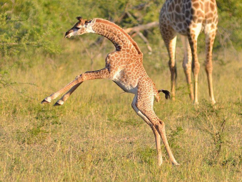 Hey, schaut mal, wie ich hüpfen kann! – Bild: Shutterstock / Dave Pusey