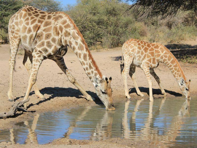 Eine kleine Pause zum Wassertrinken – Bild: Shutterstock / Stacey Ann Alberts