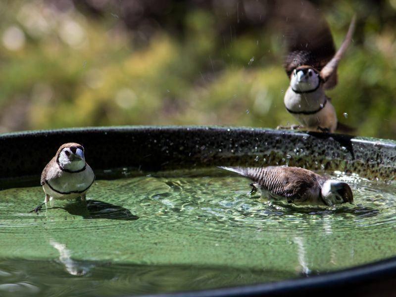 Hat da etwa jemand vor, vom Beckenrand zu springen? – Bild: Shutterstock / Eliot Holzworth