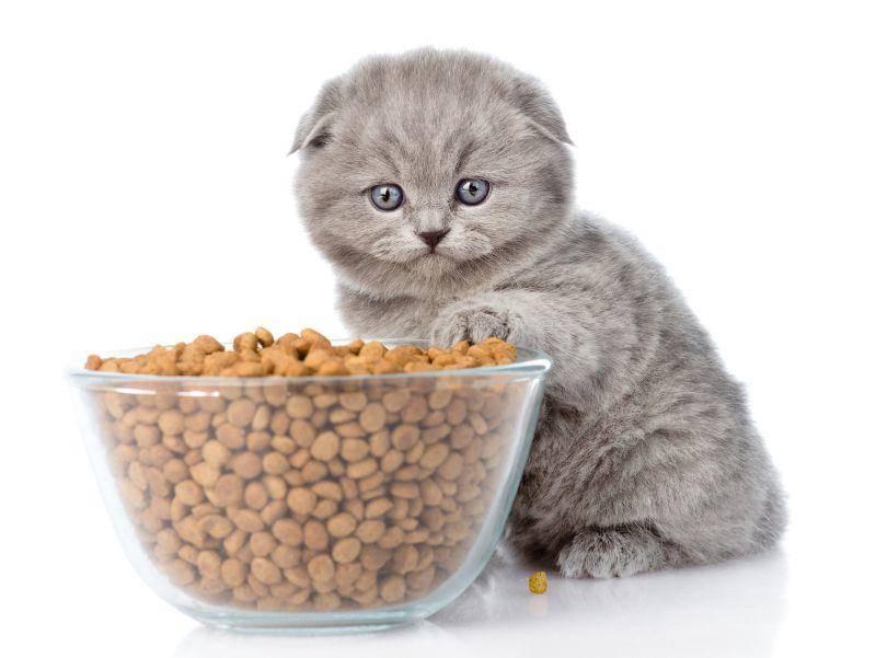 Diese graue Juniorkatze hat einen tollen Fund gemacht – Bild: Shutterstock / Ermolaev Alexander