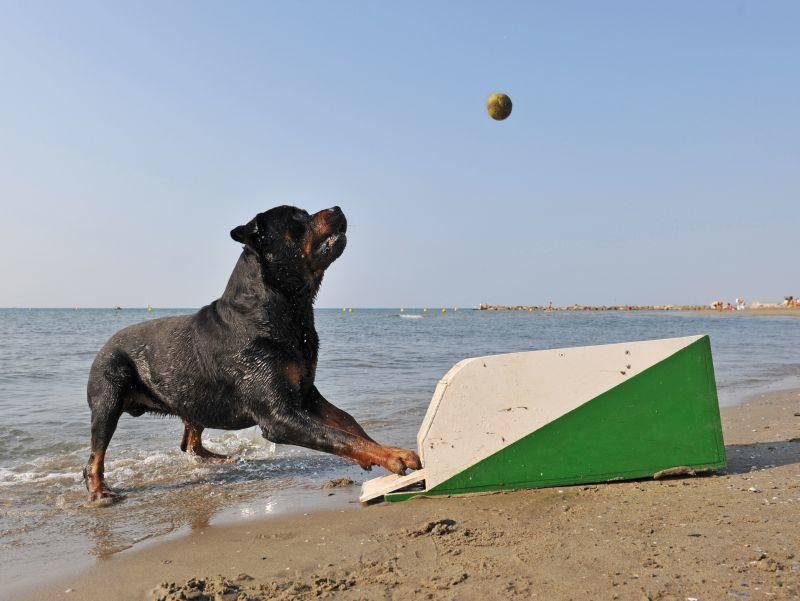 Flyball heißt der Hundesport, bei dem Vierbeiner den Ball aus einer speziellen Box fangen müssen – Bild: Shutterstock / cynoclub