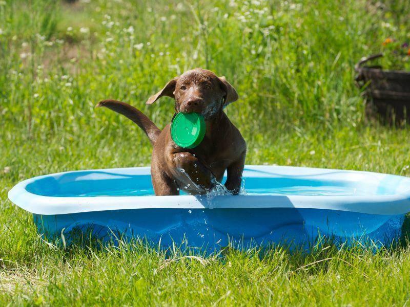 Für den Sommer: Swimmingpool für Hunde – Bild: Shutterstock / KellyNelson