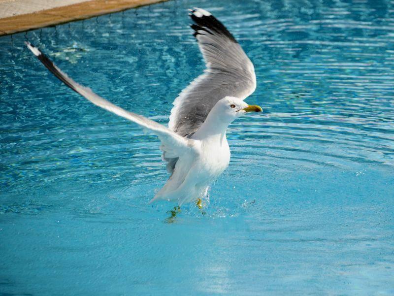 """""""Vorsichtig im Wasser landen, und dann wird geplanscht!"""", plant diese Möwe – Bild: Shutterstock / Adnan Buyuk"""