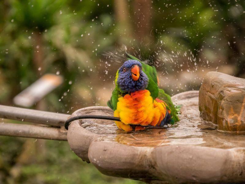 """Bunter Papagei im Vogelbad: """"Juhu, ist das toll!"""" – Bild: Shutterstock / Frank Hoekzema"""