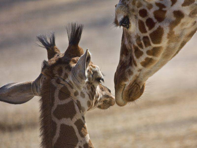 Ein Bussi für Mama: Wie süß! – Bild: Shutterstock / Sharon Morris