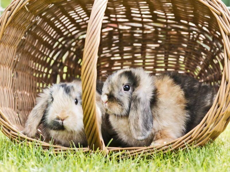 Die beliebten Haustiere kommen in den verschiedensten Farben vor – Bild: Shutterstock / Claudia Paulussen