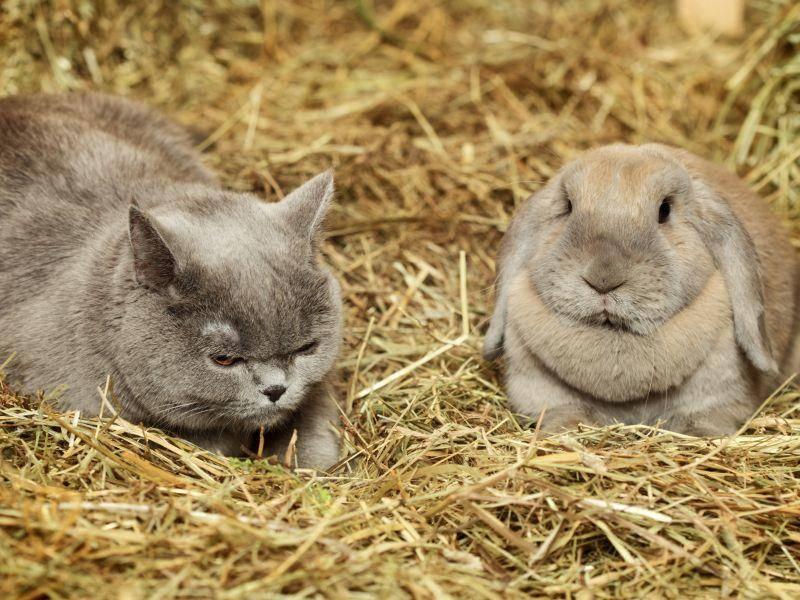 Katze und Kaninchen: Ein eher ungewöhnliches Zusammentreffen – Bild: Shutterstock / Petr Malyshev