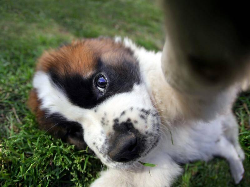 """""""Mein erstes Selfie! Cool!"""" – Bild: Shutterstock / tobkatrina"""