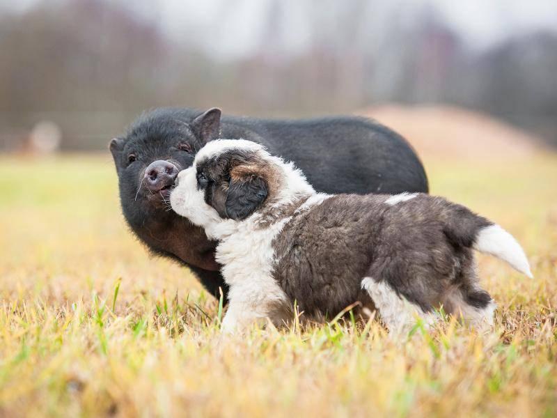 """""""Wollen wir Freunde sein?"""" – Bild: Shutterstock / Rita Kochmarjova"""