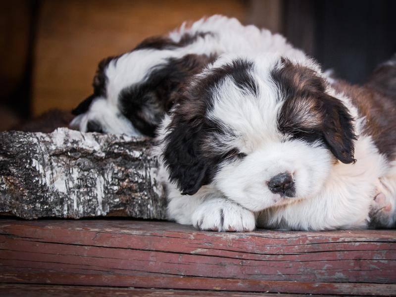 ...um ein kurzes Nickerchen zu machen – Bild: Shutterstock / dezi