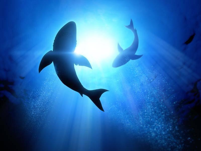 Wahrlich beeindruckende und außergewöhnliche Geschöpfe – Bild: Shutterstock / solarseven