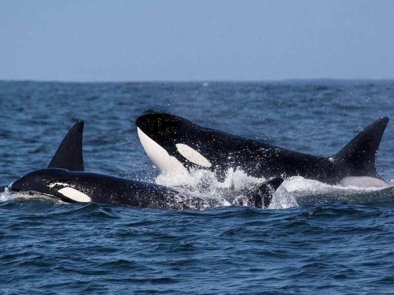 Die imposanten Tiere sind zudem auf der ganzen Welt zu finden – Bild: Shutterstock / Tory Kallman