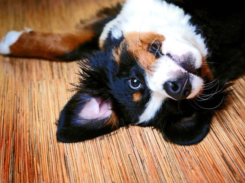 """Hallöchen!"" – Bild: Shutterstock / LovelyColorPhoto"