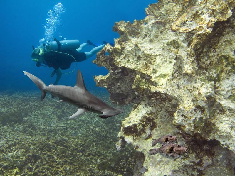 Diese Tiere sind vor allem in tropischen und subtropischen Küstengebieten zu finden – Bild: Shutterstock / Ian Scott