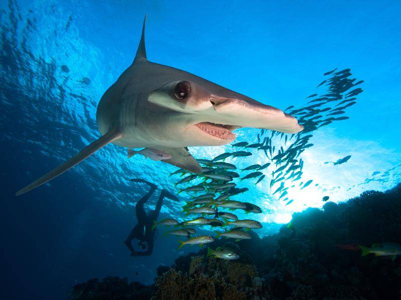 Zu ihrem täglichen Futter gehören beispielsweise Heringe und Sardinen – Bild: Shutterstock / frantisekhojdysz