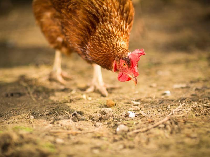 Diese Tiere ernähren sich unter anderem von Würmern, Schnecken und Gras – Bild: Shutterstock / l i g h t p o e t