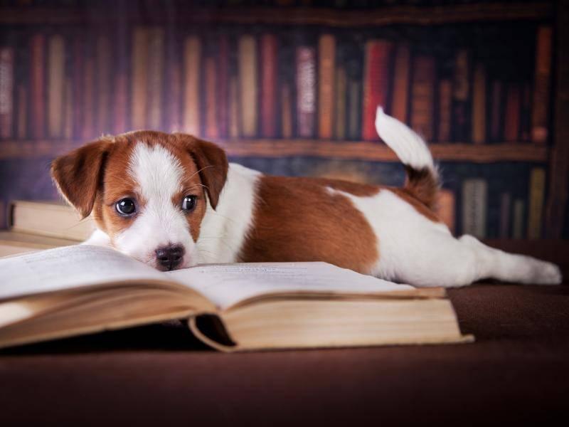 Ein Buch eignet sich nicht nur zum Lesen, sondern auch um daneben zu liegen – Bild: Shutterstock / dezi