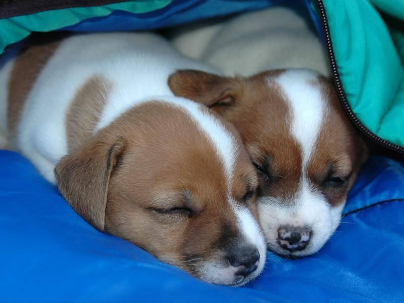 Völlig erschöpft, die Kleinen! Träumt was Schönes! – Bild: Shutterstock / Paula Stephens