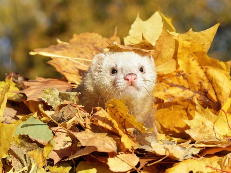 Hui, Herbstsonne! Schööön! – Bild: Shutterstock / Jagodka