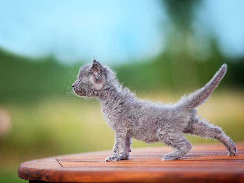 Strecken tut gut – Bild: Shutterstock / otsphoto
